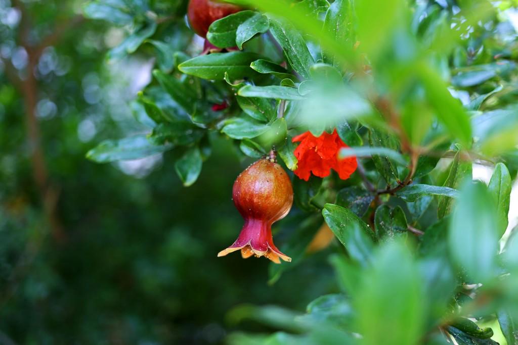 Pinehill-garden10