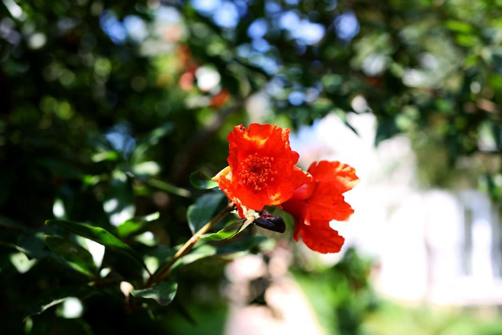 Pinehill-garden11