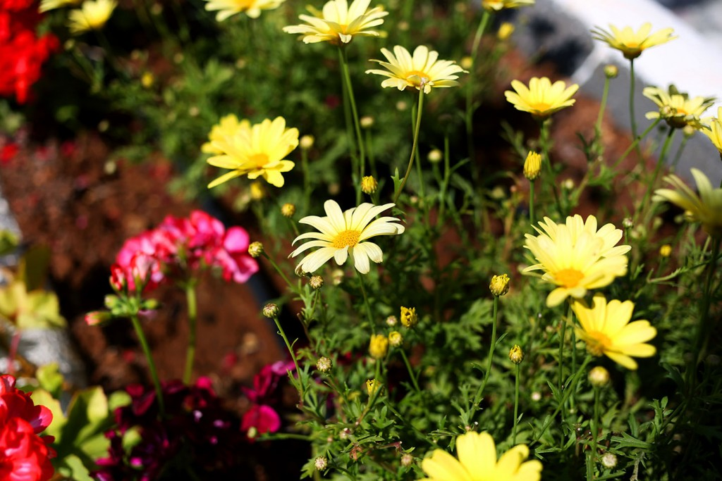 Pinehill-garden12