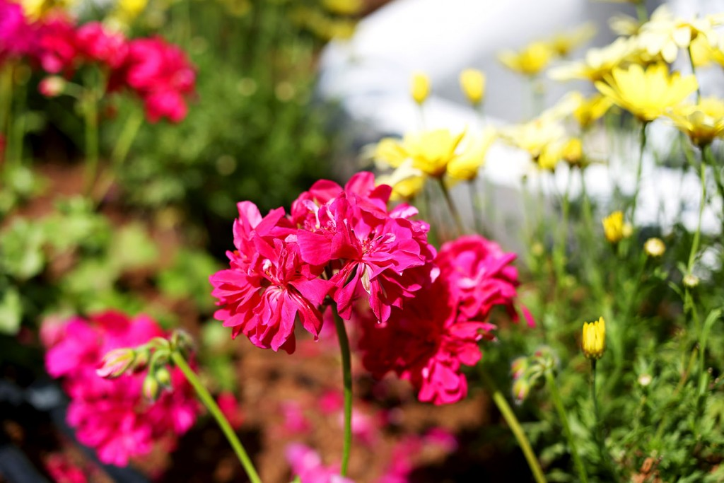 Pinehill-garden13