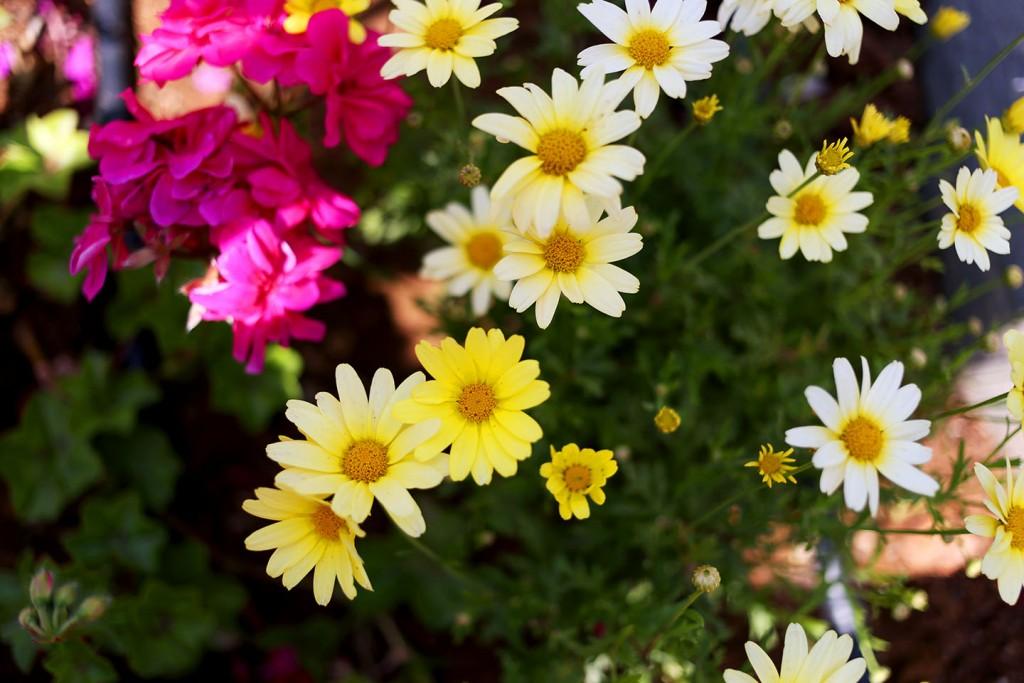 Pinehill-garden14
