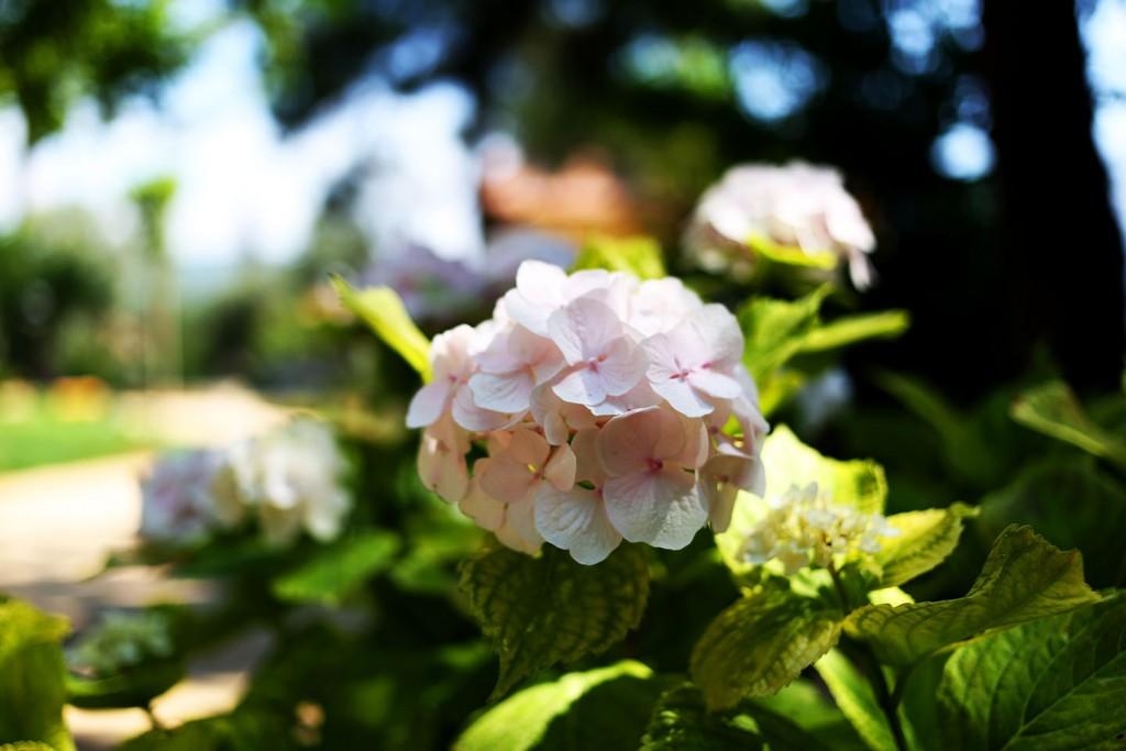 Pinehill-garden4
