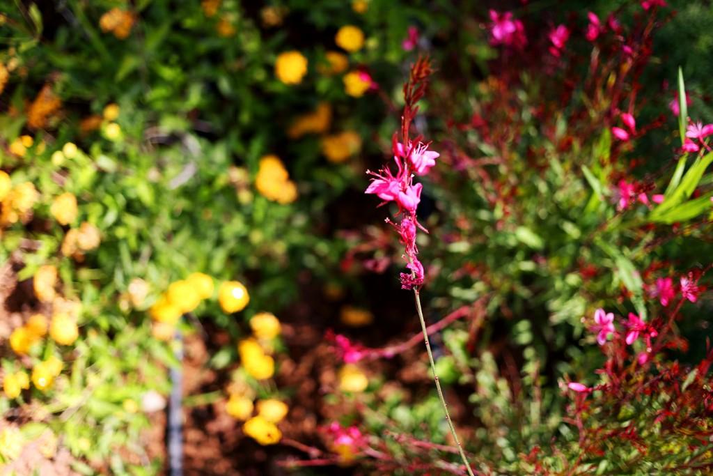 Pinehill-garden5