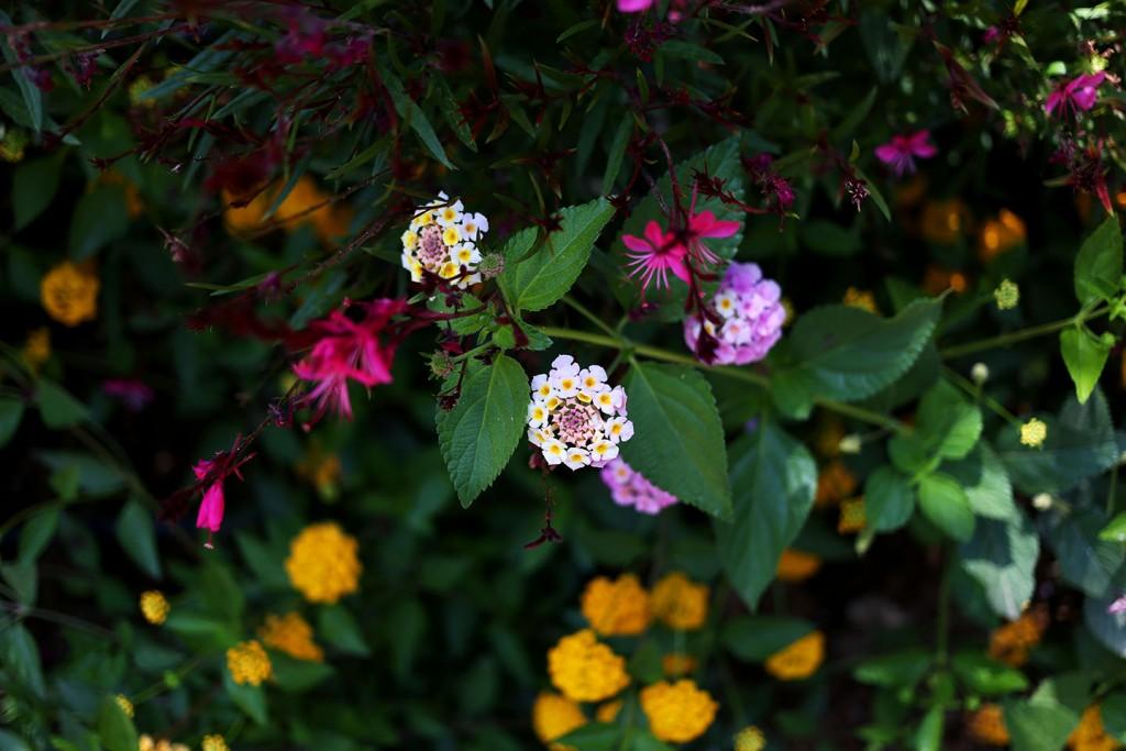 Pinehill-garden6
