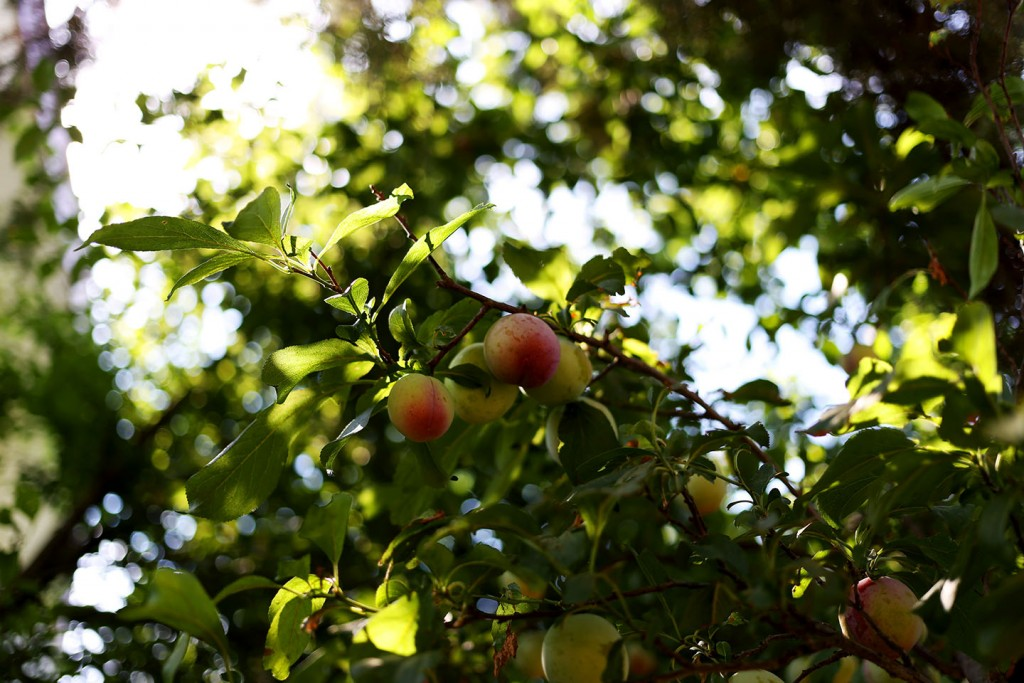 Pinehill-garden8